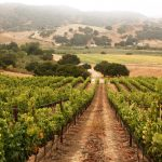 Earth Day SIP Certified Wine Featuring Ampelos Cellars