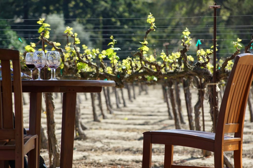 sipping in the vineyard