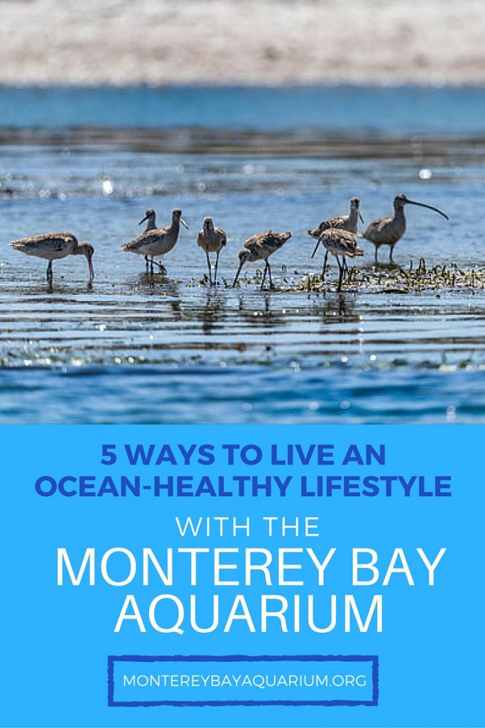 5 Ways to live an ocean-healthy lifestyle