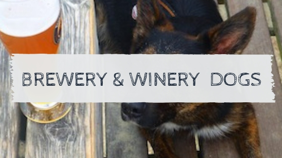 Brewery & Winery Dogs